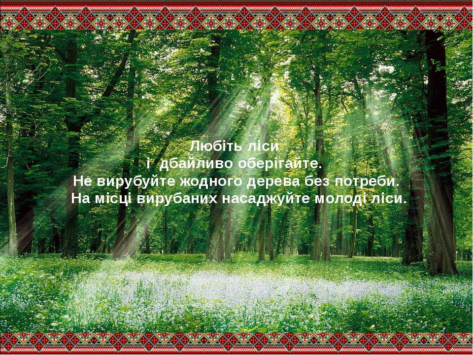 Любіть ліси і дбайливо оберігайте. Не вирубуйте жодного дерева без потреби. Н...
