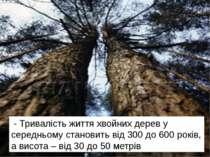- Тривалість життя хвойних дерев у середньому становить від 300 до 600 років,...