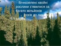 - Вічнозелені хвойні рослини з'явилися за багато мільйонів років до листяних ...