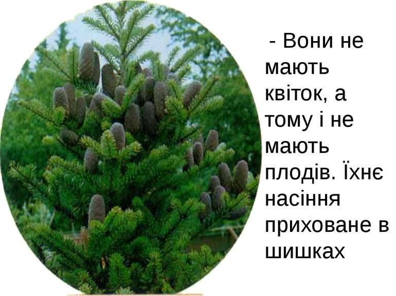 - Вони не мають квіток, а тому і не мають плодів. Їхнє насіння приховане в ши...