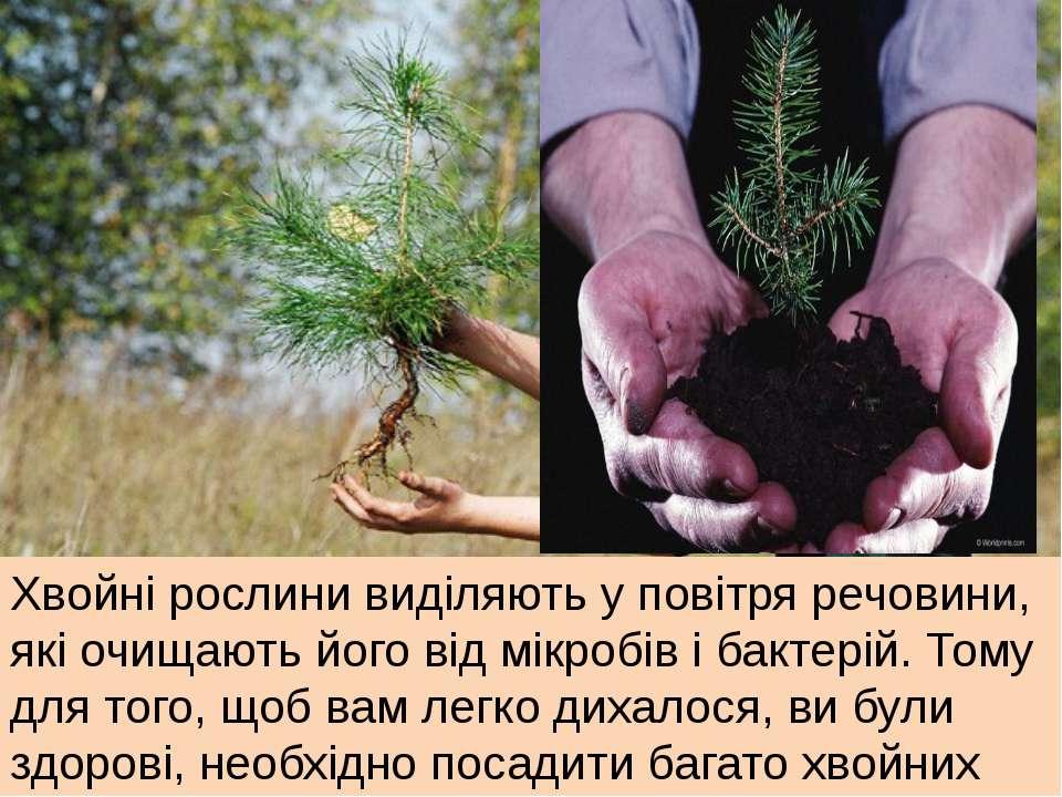 Хвойні рослини виділяють у повітря речовини, які очищають його від мікробів і...