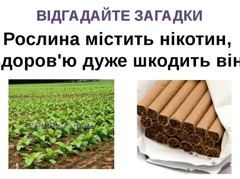 ВІДГАДАЙТЕ ЗАГАДКИ Рослина містить нікотин, здоров'ю дуже шкодить він.