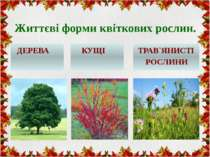 Життєві форми квіткових рослин. ДЕРЕВА КУЩІ ТРАВ`ЯНИСТІ РОСЛИНИ