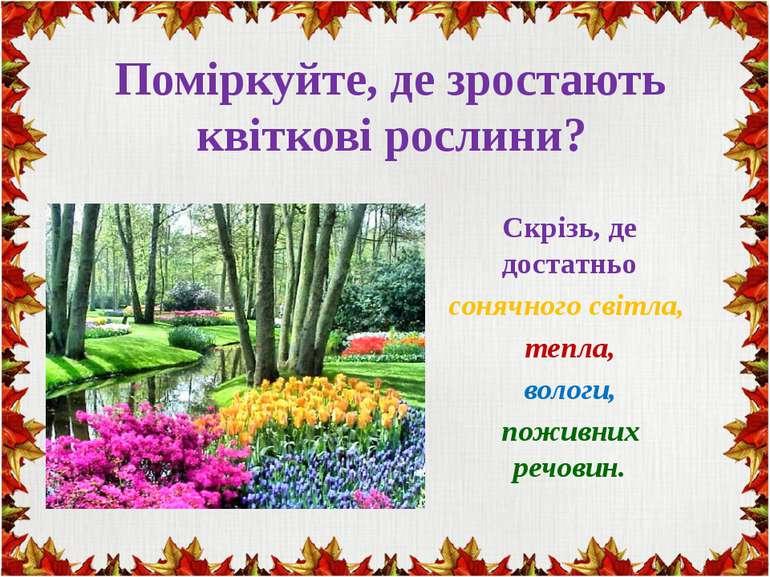 Поміркуйте, де зростають квіткові рослини? Скрізь, де достатньо сонячного сві...