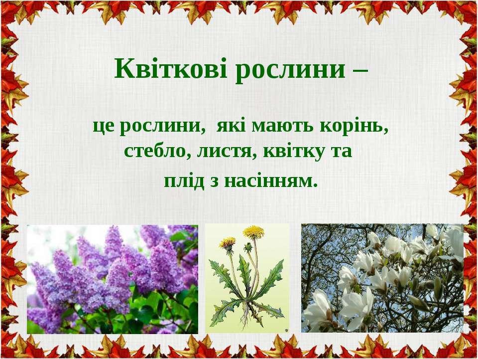 Квіткові рослини – це рослини, які мають корінь, стебло, листя, квітку та плі...