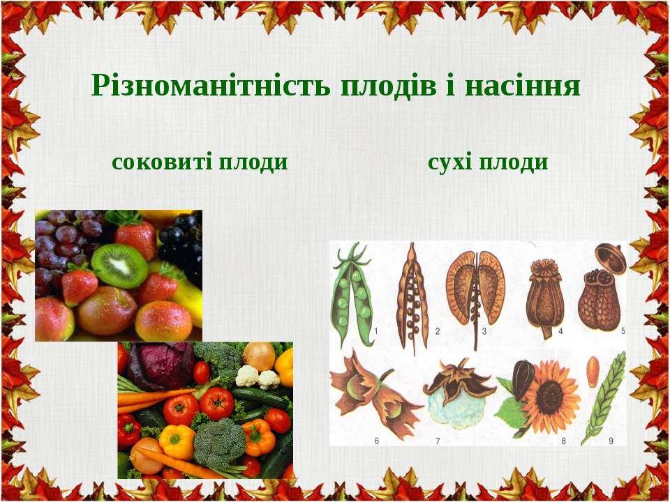 Різноманітність плодів і насіння соковиті плоди сухі плоди