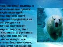 Для людини білий ведмідь є найнебезпечнішим проміж всіх видів ведмедей: завдя...