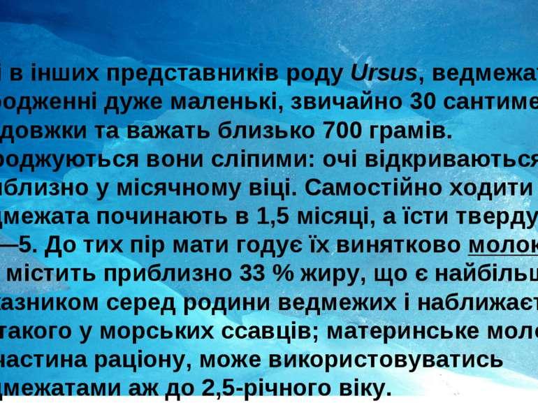 Як і в інших представників роду Ursus, ведмежата при народженні дуже маленькі...