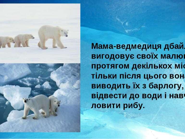 Мама-ведмедиця дбайливо вигодовує своїх малюків протягом декількох місяців і ...