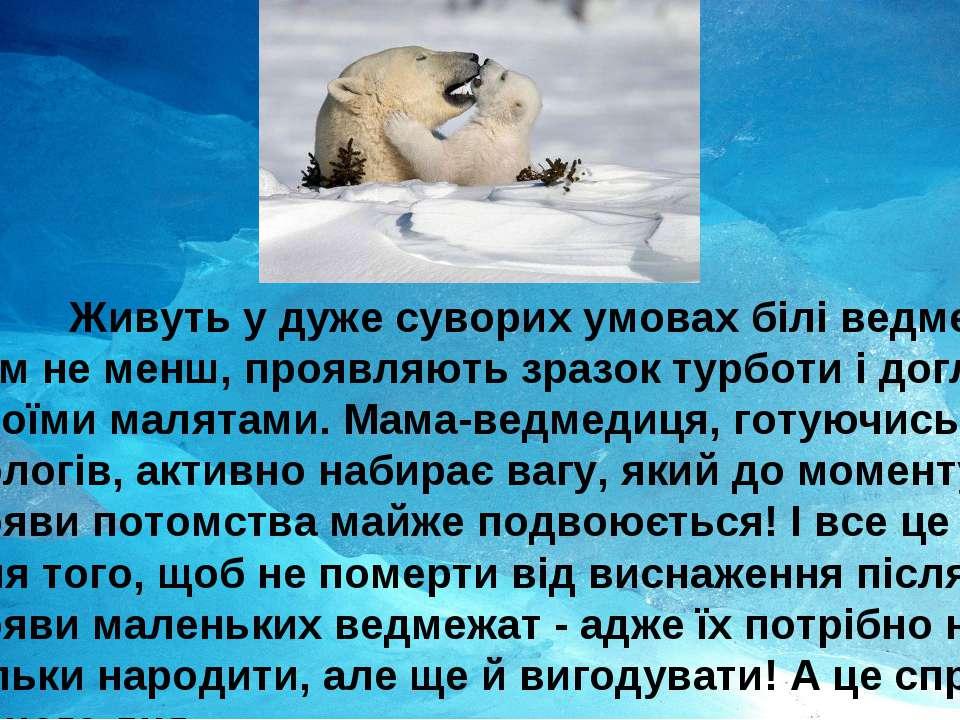 Живуть у дуже суворих умовах білі ведмеді, тим не менш, проявляють зразок тур...