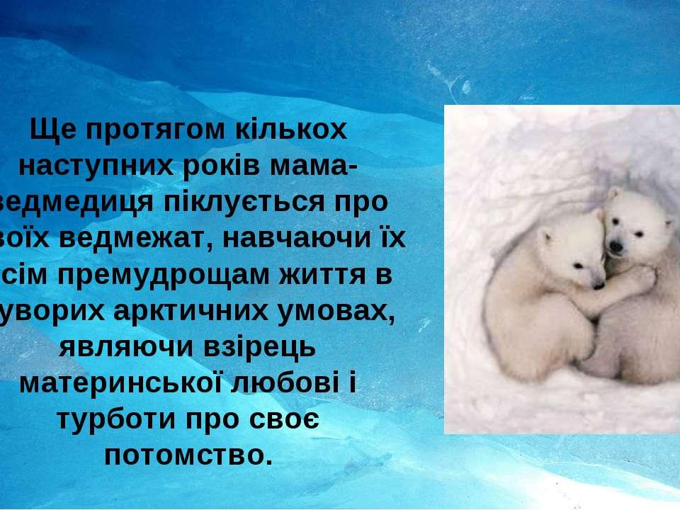 Ще протягом кількох наступних років мама-ведмедиця піклується про своїх ведме...