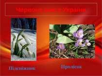 Червона книга України Підсніжник Пролісок