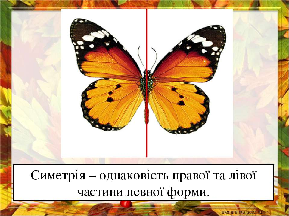 Симетрія – однаковість правої та лівої частини певної форми.