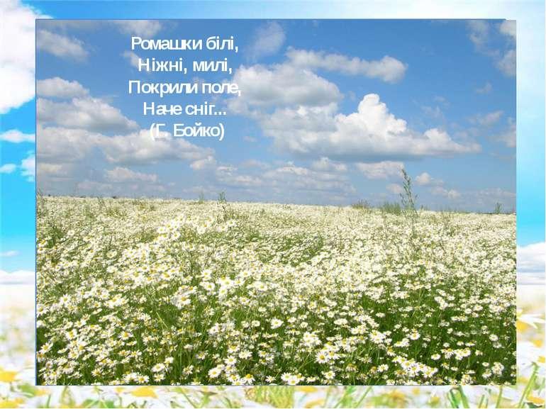 Ромашки білі, Ніжні, милі, Покрили поле, Наче сніг... (Г. Бойко)