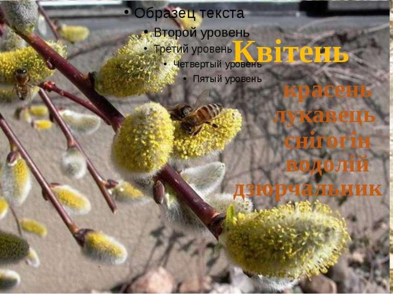 Квітень красень лукавець снігогін водолій дзюрчальник