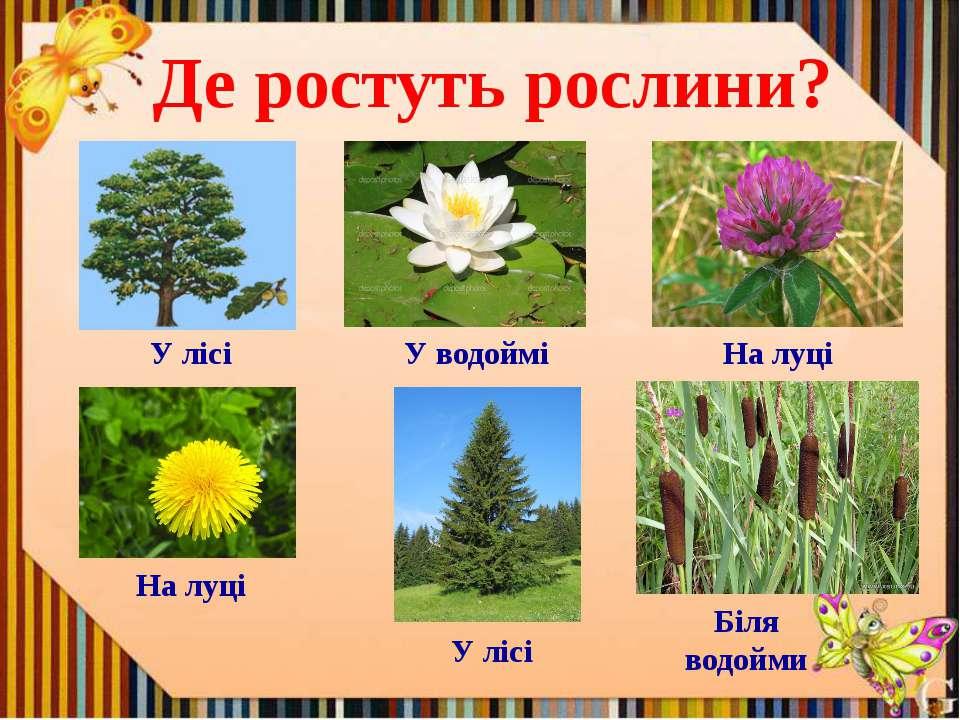 Де ростуть рослини? У лісі У водоймі На луці На луці У лісі Біля водойми