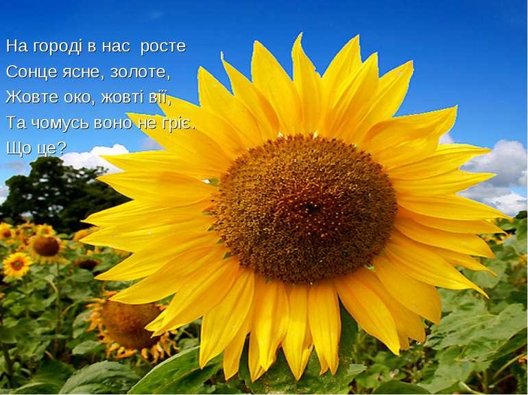 На городі в нас росте Сонце ясне, золоте, Жовте око, жовті вії, Та чомусь вон...