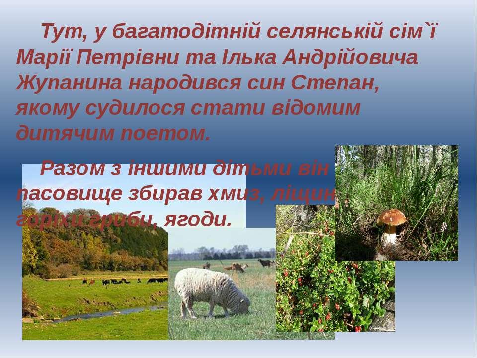 Тут, у багатодітній селянській сім`ї Марії Петрівни та Ілька Андрійовича Жупа...
