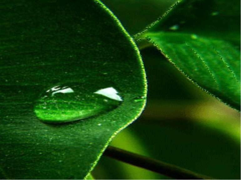 Вирушаємо у подорож Рано-вранці на листочку прокинулась краплинка роси