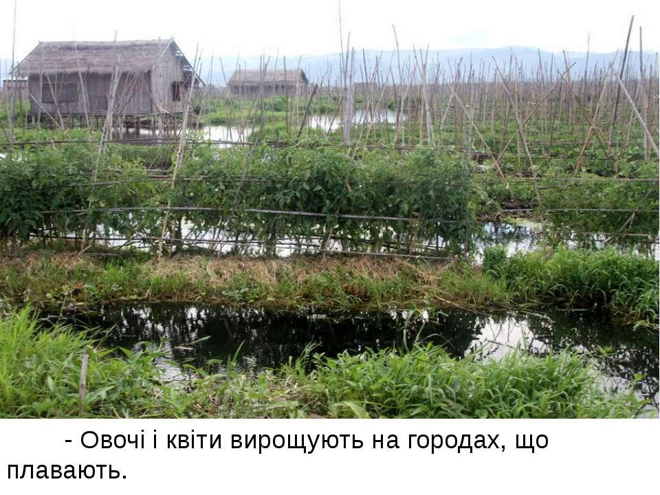 - Овочі і квіти вирощують на городах, що плавають.