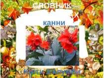 СЛОВНИК У КАРТИНКАХ Квіти з клумби канни