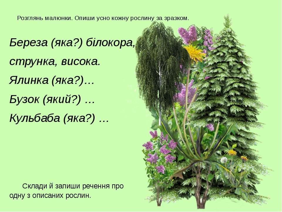 Розглянь малюнки. Опиши усно кожну рослину за зразком. Береза (яка?) білокора...