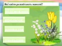 Які квіти розквітають навесні? сніжпідник підсніжник лісокпро пролісок валіяк...