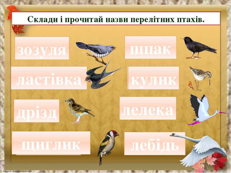 Склади і прочитай назви перелітних птахів. зулязо зозуля стівлака ластівка зд...