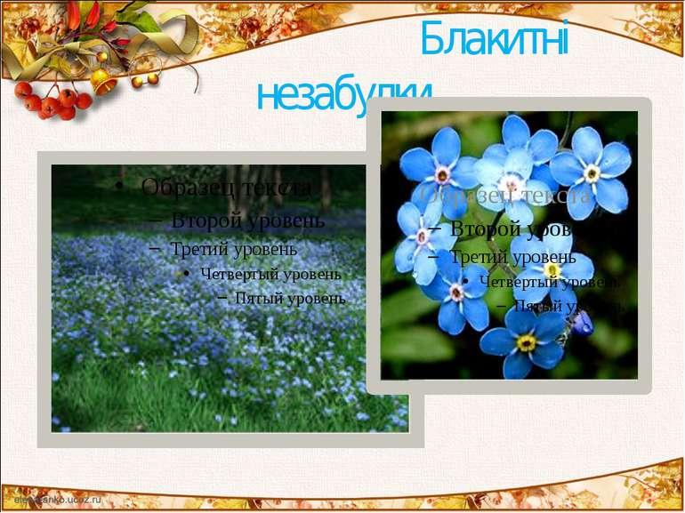 Блакитні незабудки