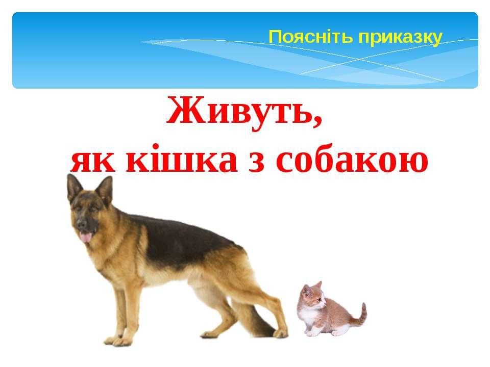 Поясніть приказку Живуть, як кішка з собакою