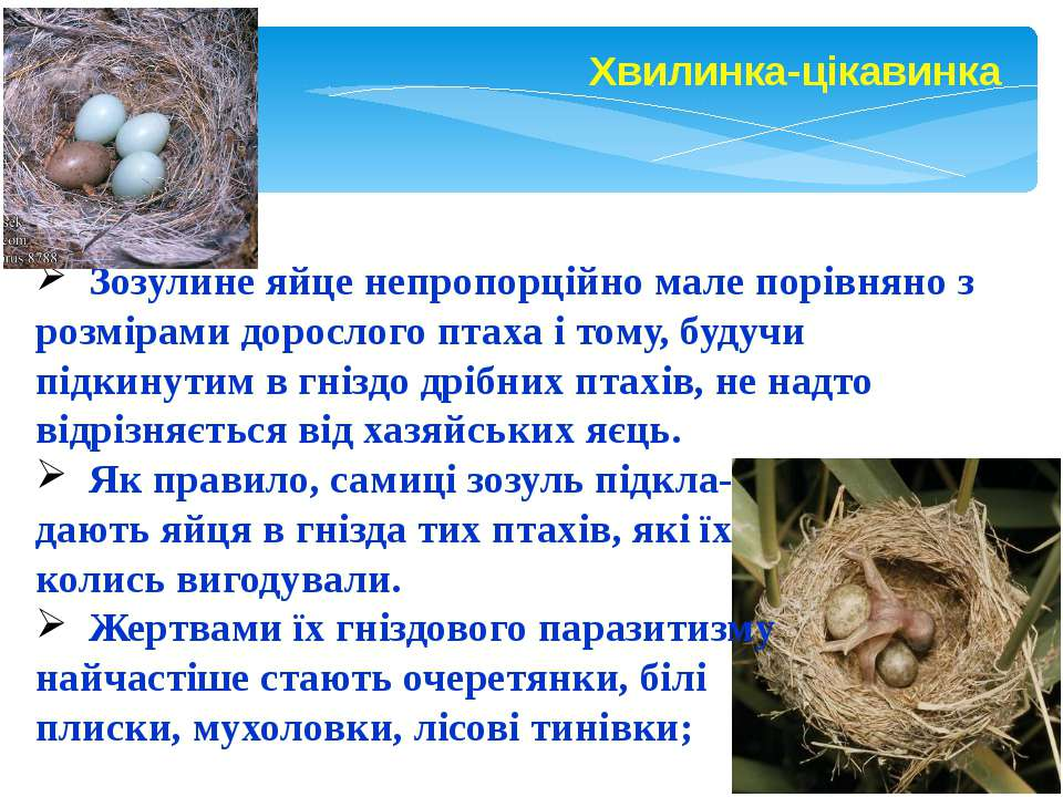 Зозулине яйце непропорційно мале порівняно з розмірами дорослого птаха і тому...