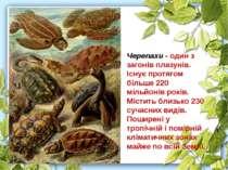 Черепахи - один з загонів плазунів. Існує протягом більше 220 мільйонів років...