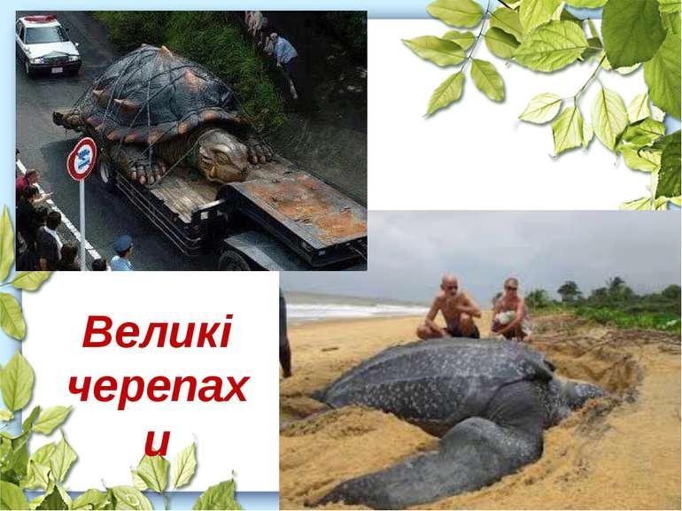 Великі черепахи
