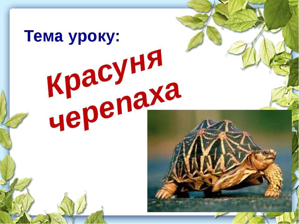 Тема уроку: Красуня черепаха