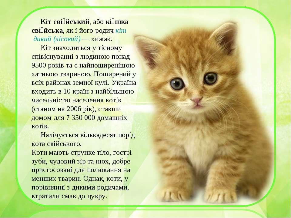 Кіт сві йський, або кі шка сві йська, як і його родич кіт дикий (лісовий)— х...