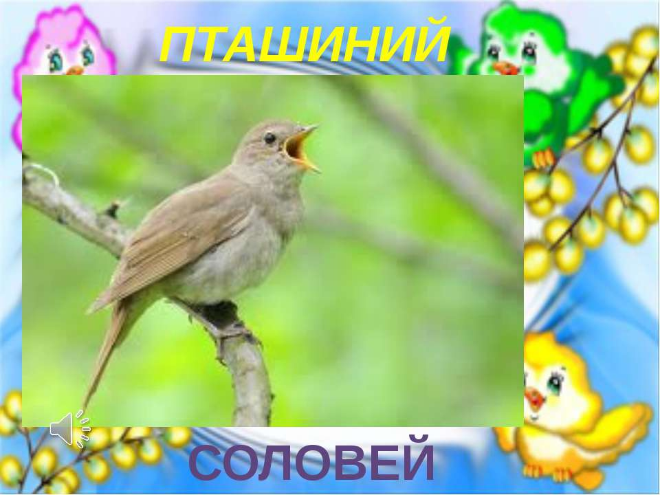 ПТАШИНИЙ КОНЦЕРТ СОЛОВЕЙ