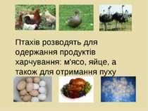 Птахів розводять для одержання продуктів харчування: м'ясо, яйце, а також для...