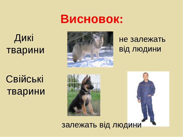 Висновок: не залежать від людини залежать від людини Дикі тварини Свійські тв...