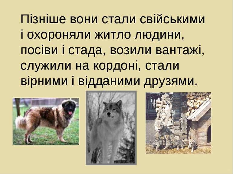 Пізніше вони стали свійськими і охороняли житло людини, посіви і стада, возил...