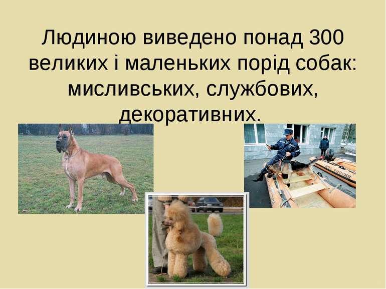 Людиною виведено понад 300 великих і маленьких порід собак: мисливських, служ...