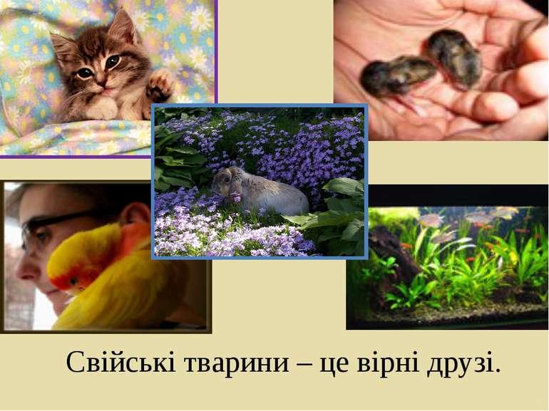 Свійські тварини – це вірні друзі.