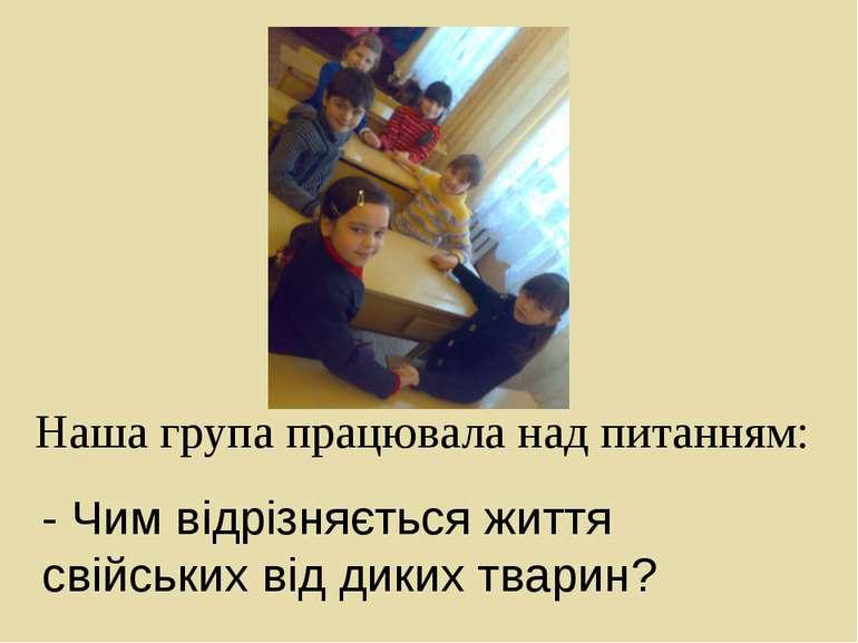 Наша група працювала над питанням: - Чим відрізняється життя свійських від ди...