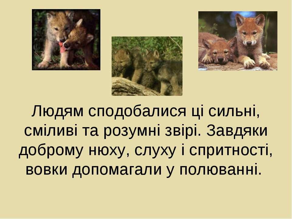 Людям сподобалися ці сильні, сміливі та розумні звірі. Завдяки доброму нюху, ...