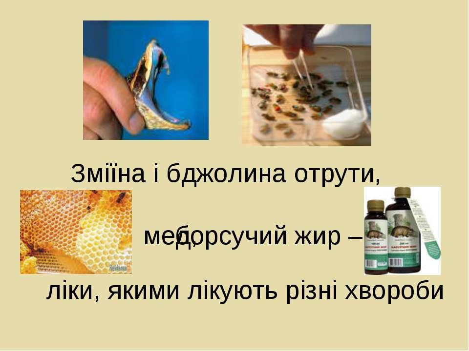 ліки, якими лікують різні хвороби Зміїна і бджолина отрути, мед, борсучий жир –