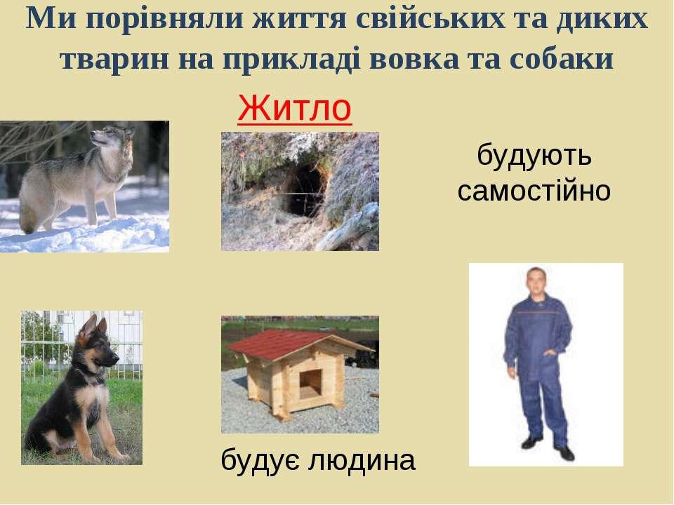 Ми порівняли життя свійських та диких тварин на прикладі вовка та собаки Житл...