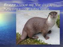 Видра –хижий звір. Має цінне хутро. Живе біля водойм і добре плаває.