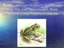 Жаба– маленька безхвоста земноводна тварина. Має довгі задні кінцівки. Живе ...