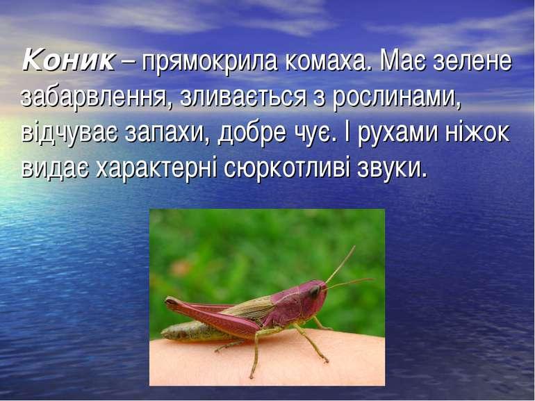Коник– прямокрила комаха. Має зелене забарвлення, зливається з рослинами, ві...
