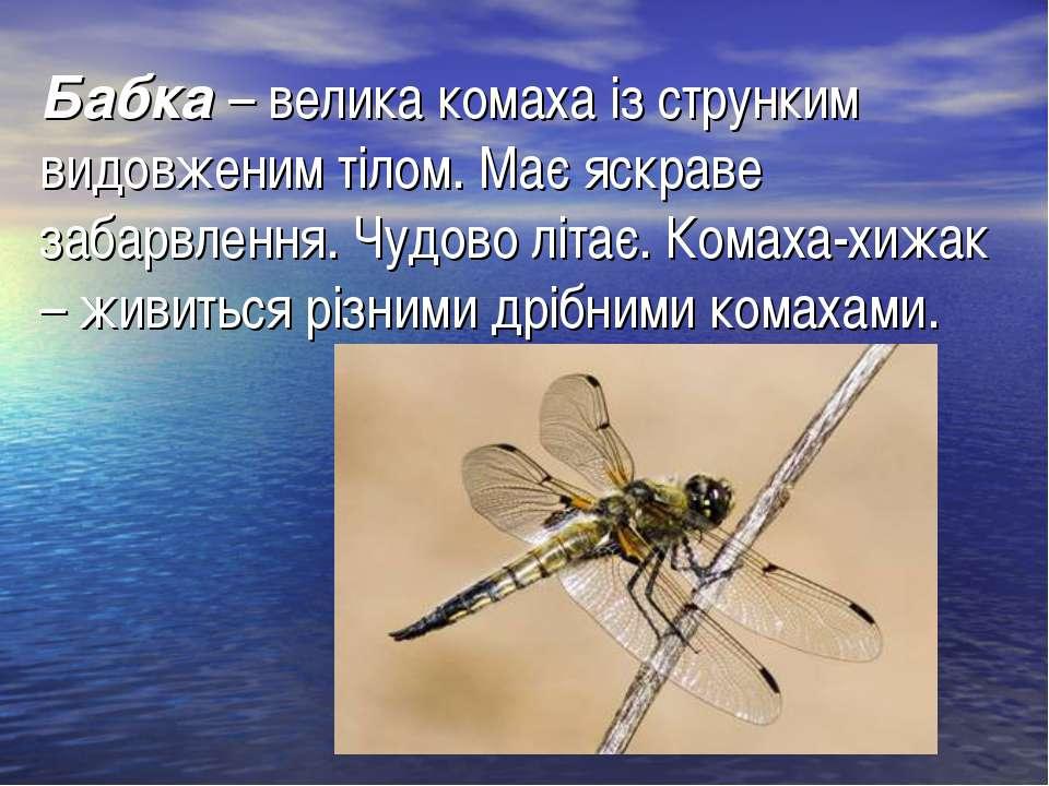 Бабка– велика комаха із струнким видовженим тілом. Має яскраве забарвлення. ...