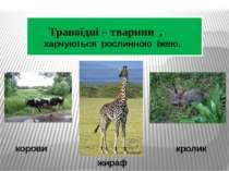 У жирафів найбільше серце з усіх наземних тварин . Папуги та кролики – єдині ...